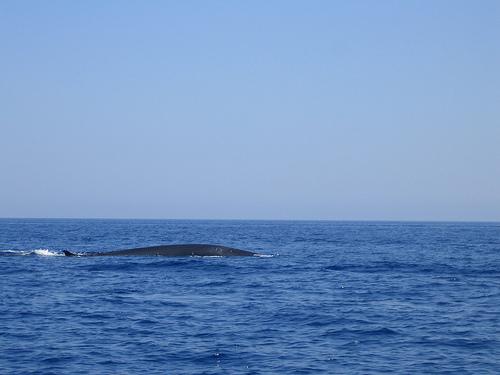una balena??? - Pantelleria - Visit Italy