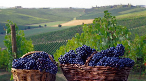 District Of Langhe Tourism Best Of District Of Langhe