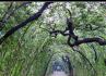 Florence - Florence, Boboli Gardens - Florence - Visit Italy