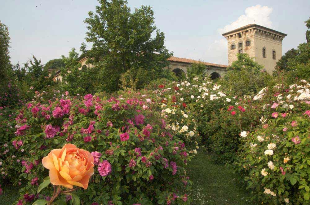 Castello quistini rovato visit italy for Rose da giardino