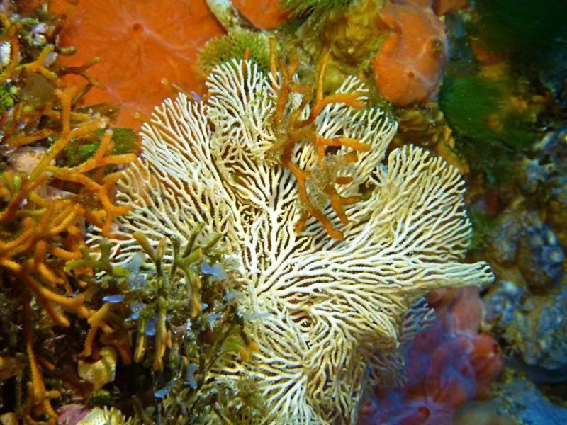 Taglio di Scauri e Punta Tre Pietre - Pantelleria  - Visit Italy