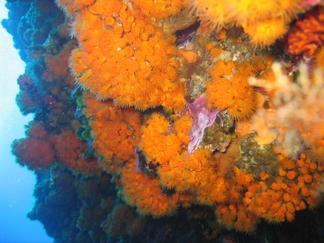 Sotto il mare di Pantelleria