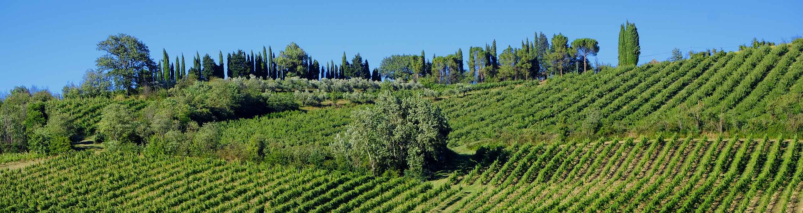 Paesaggio tra Imola e Riolo Terme