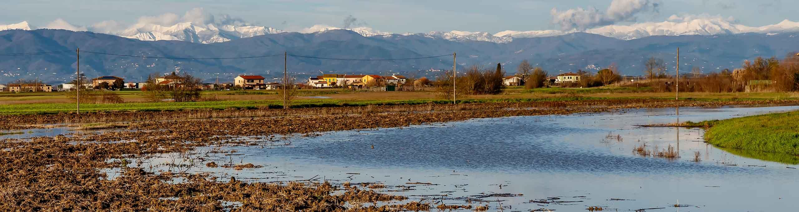 Palude vicino a Bientina e Alpi Apuane innevate