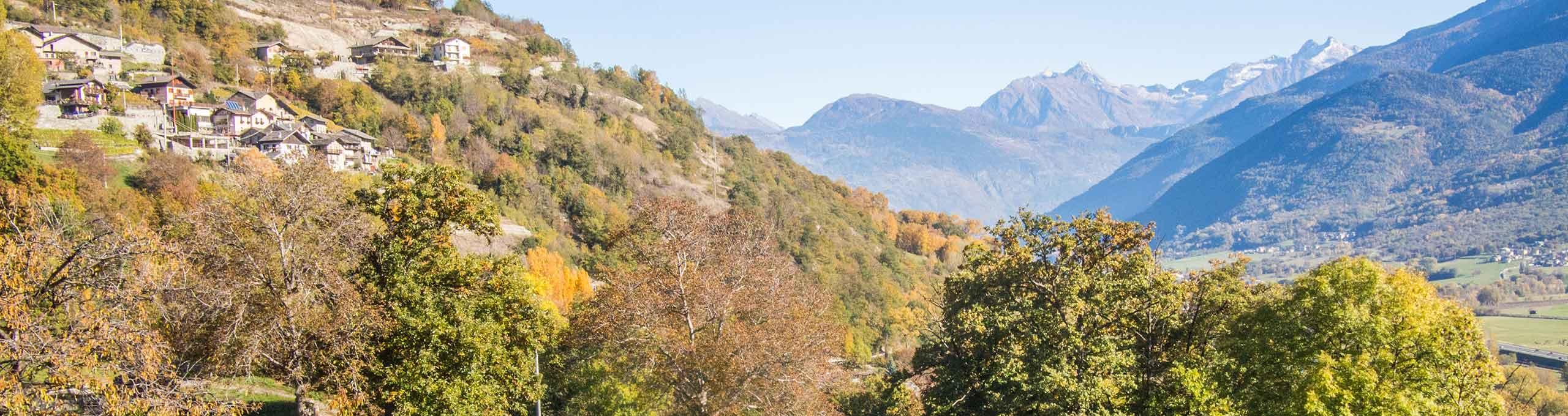 Vista su vitigni Granges Organic